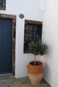 Spiti Stelios courtyard Olive tree generic